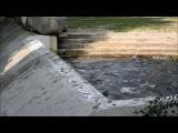 Слон купается в киевском зоопарке